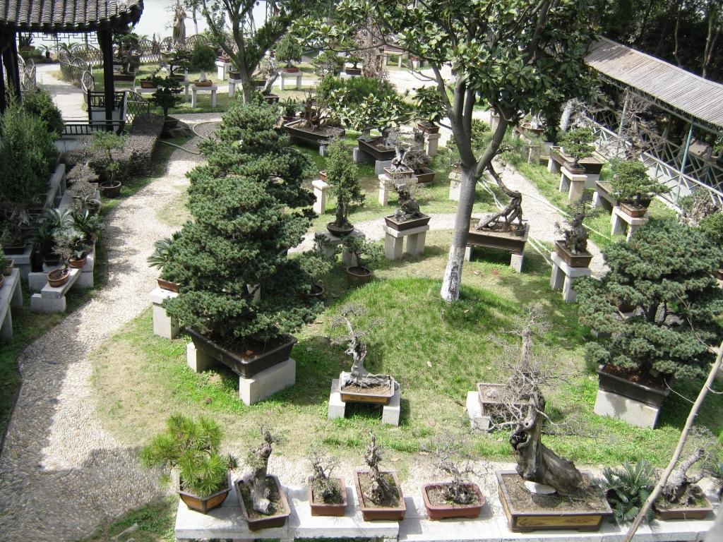 Бонсай в садах Сучжоу