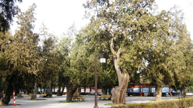 Храм окружен красивым парком, наполненным тишиной и покоем, что так приятно ощущается после толпы туристов в Запретном Городе