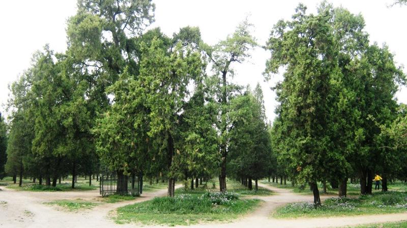 Храм Неба окружен красивейшим парком